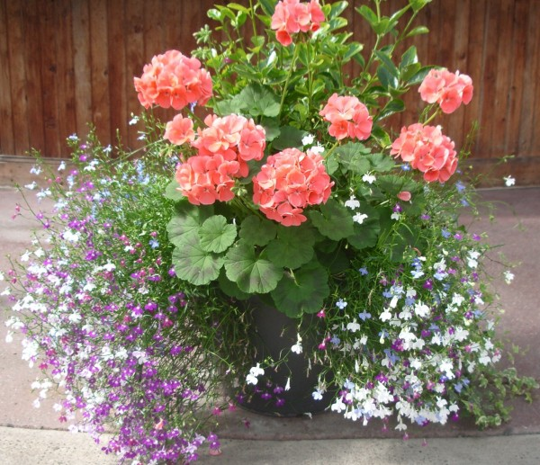 Floral displays to welcome arriving visitors