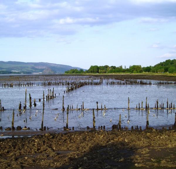PGtimber ponds 0605 SH 5